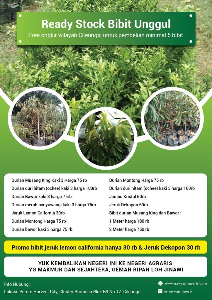 Jual bibit durian musang king, bawor, monthong, duri hitam, durian merah di cileungsi